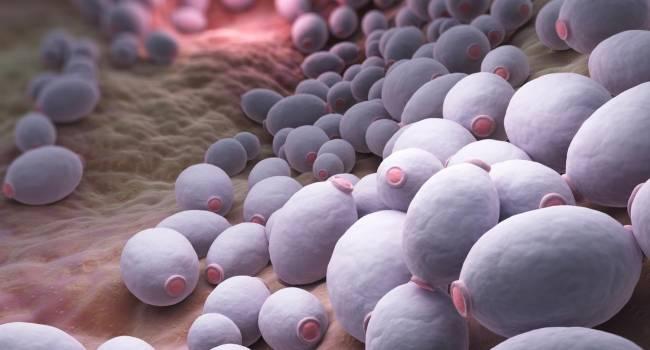 puede sudafed causar infección por hongos