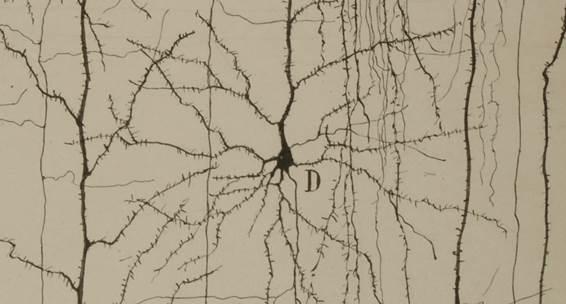 Dibujo del Legado de Santiago Ramón y Cajal